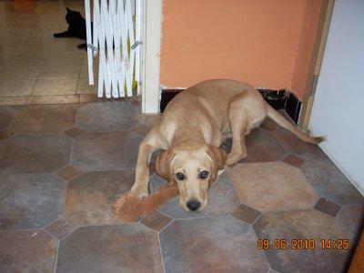 benji mon nouveau chien adopter a la spa de charleroi bienvenu sur mon blog. Black Bedroom Furniture Sets. Home Design Ideas